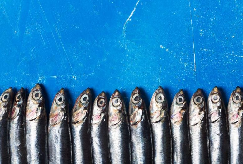 Photo of anchovies