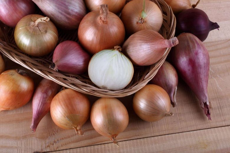 Buying, Storing, and Cooking Onions: A Guide